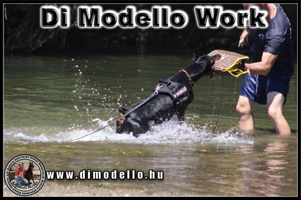 modelloworkbej
